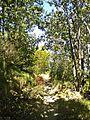 Le Cavallaie-paesaggio 26.jpg