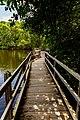 Le ponton dans la mangrove.jpg