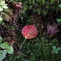 Leaf (14909652380).jpg