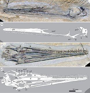 <i>Liaodactylus</i>