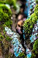 Lichen (24571954081).jpg