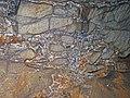 Limestone breccia & gypsum wedging (Ste. Genevieve Limestone, Middle Mississippian; Rose's Pass, Mammoth Cave, Kentucky, USA) 1 (38001456466).jpg