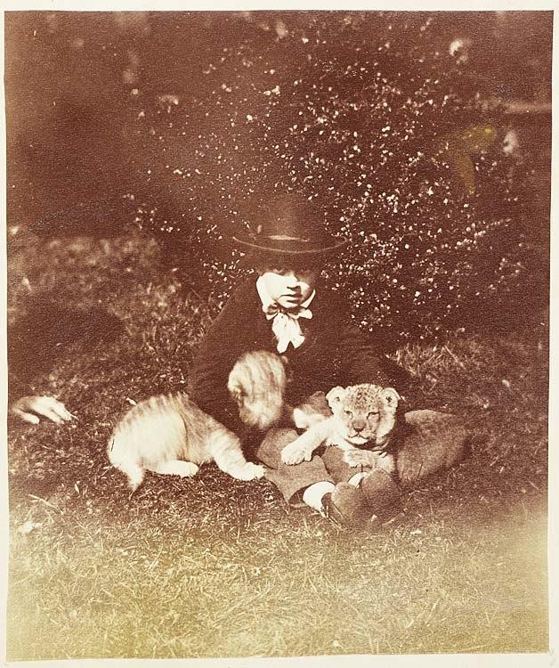 Lion cubs (4031355883)