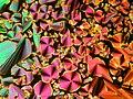 Liquid crystal textures 2.jpg