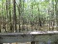 Little River Trail 03, Reed Bingham Park.JPG