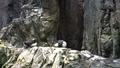 Little penguins (24769483607).png