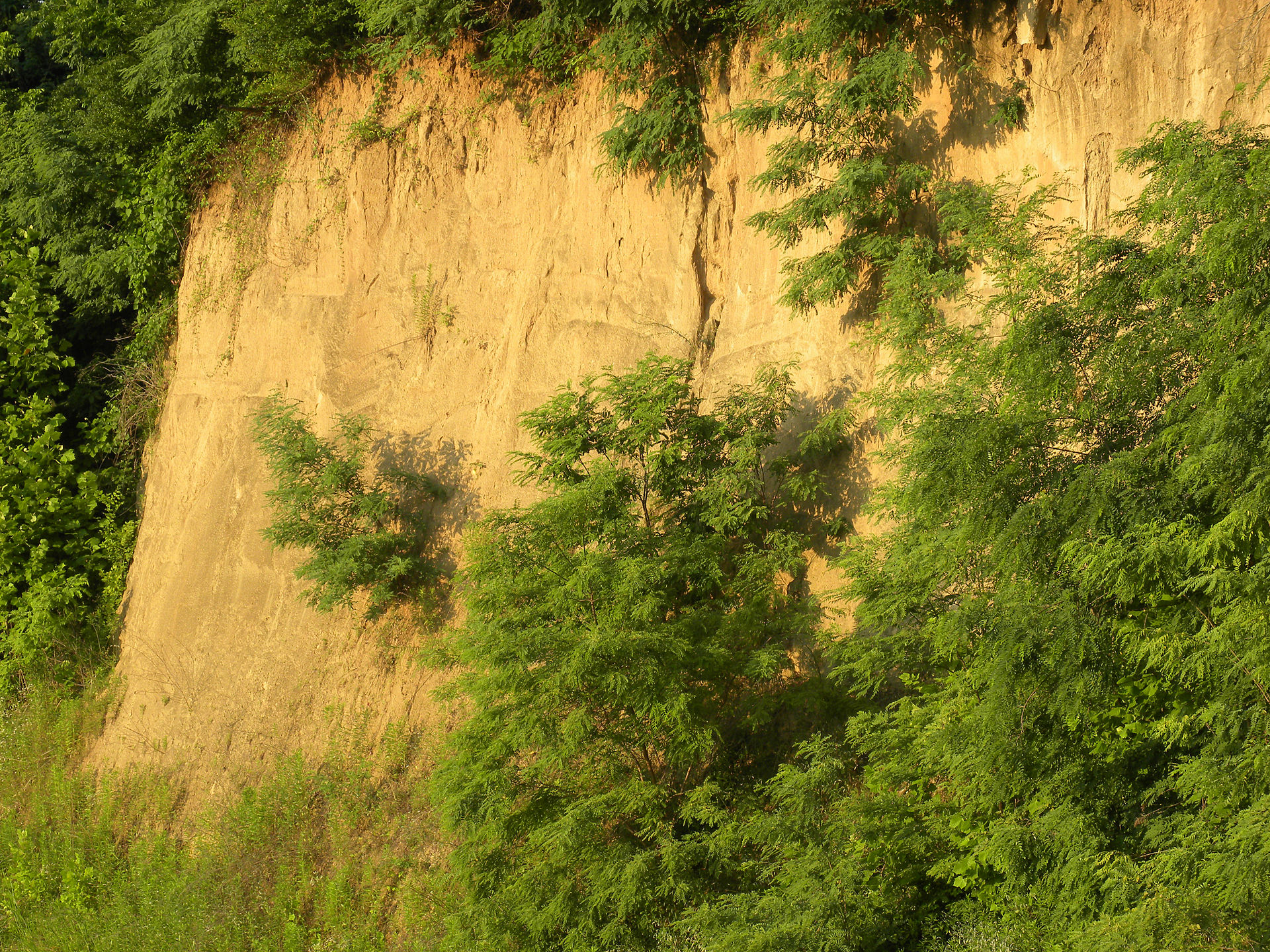 Loess wikipedia for Define soil formation