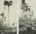 Logging; the principles and general methods of operation in the United States (1913) (14596320930).jpg