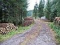 Logpiles at Craggiemore - geograph.org.uk - 219661.jpg