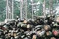 Logs awaiting collection - geograph.org.uk - 981125.jpg