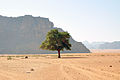 Lonely tree - Wadi Rum (12465322614).jpg