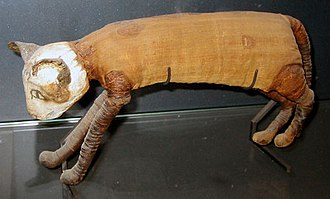 Animal mummy - A mummified cat