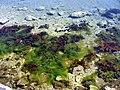 Lumbardai part - panoramio.jpg