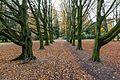 Münster, Park Sentmaring -- 2014 -- 3969.jpg