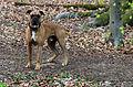 Münster, Wolbeck, Wolbecker Tiergarten, Hund -- 2014 -- 7130.jpg