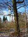 MHL Stadtwald Luthereiche und Turm.jpg