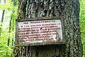 MOs810, WG 2014 20, OChK Las Miejski (Rozdrazewski Quercus).JPG