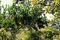 MUNTENO LADUKUTI - panoramio.jpg