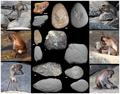 Macaca fascicularis aurea stone tools - journal.pone.0072872.g002.png