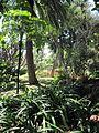 Madeira em Abril de 2011 IMG 1784 (5663646027).jpg