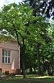 Magnolia Kobus Rudnytskoho 25 RB.jpg