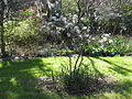 Magnolia Plantation and Gardens - Charleston, South Carolina (8556529890).jpg