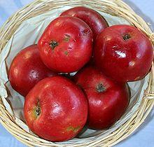 apfelbaum carola