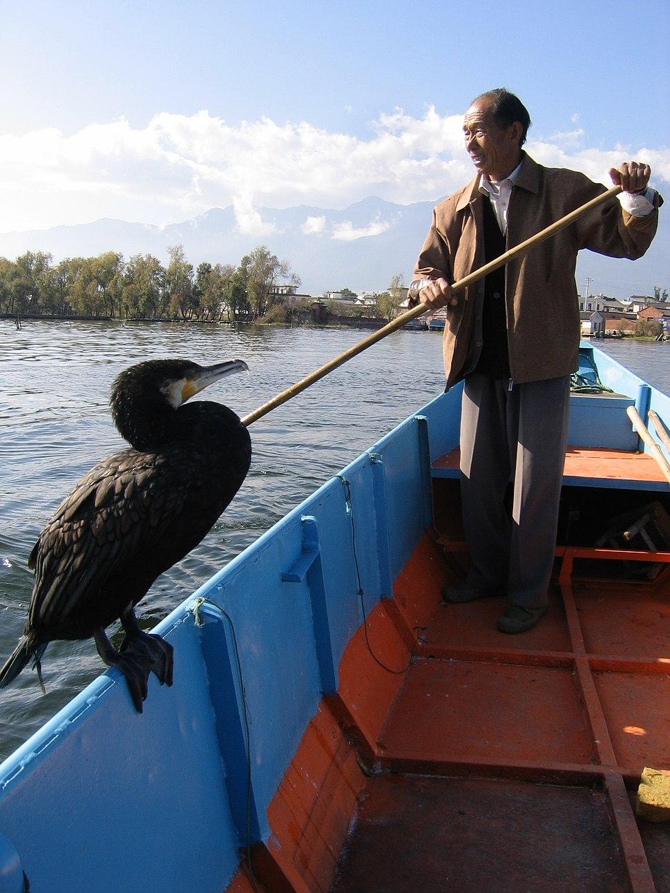 Man with cormorant