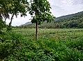 Mangad - panoramio (3).jpg