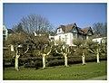 March Spring Schloßpark Emmendingen - Master Season Rhine Valley Photography 2013 - panoramio.jpg