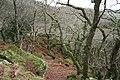 Meavy, Dewerstone Wood - geograph.org.uk - 653525.jpg