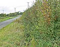 Medbourne Road towards Slawston - geograph.org.uk - 569503.jpg
