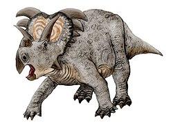 Medusaceratops NT.jpg