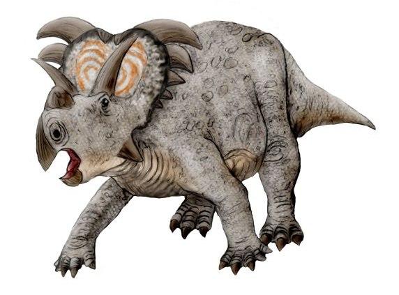 Medusaceratops NT