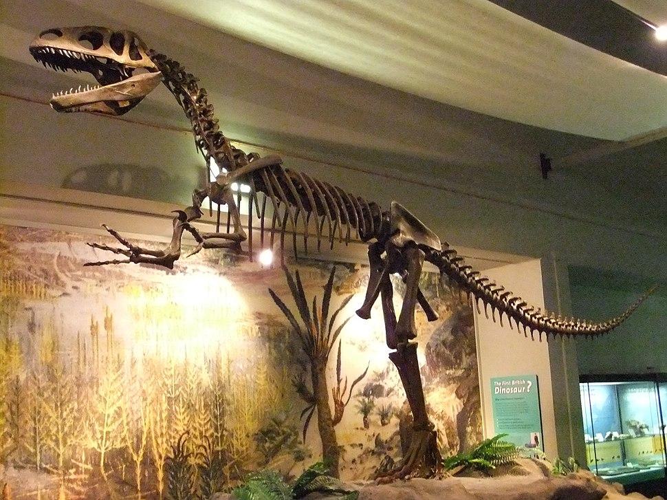 Megalosaurus, World Museum Liverpool (2)