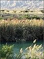 Migratory birds پرندگان مهاجر - panoramio.jpg
