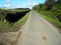 Minor Road Beside Wintersheugh Plantation - geograph.org.uk - 564774.jpg