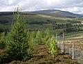 Mixed forestry plantation - geograph.org.uk - 246891.jpg