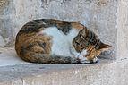 Moni Preveli Cat 01.JPG