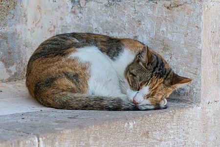 Sleeping cat in Preveli Monastery (Moni Preveli), Crete