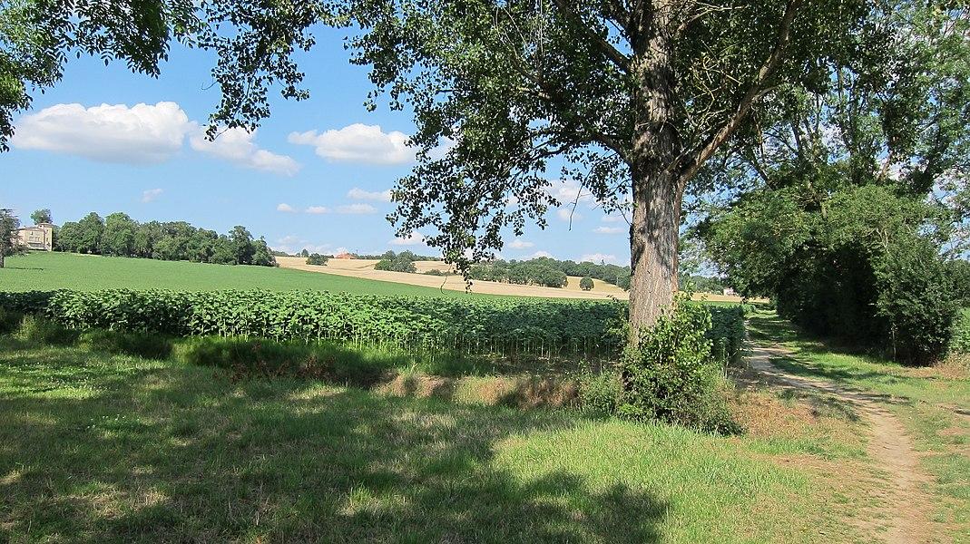 Montrabé (Haute-Garonne, Midi-Pyrénées, France): La campagne de Beaupuy vue depuis Casties.