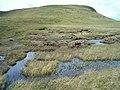 Moorland bog pools - geograph.org.uk - 194528.jpg