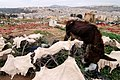 Morocco Africa Flickr Rosino December 2005 84968879.jpg