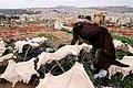 Morocco Africa Flickr Rosino December 2005 84968879.jpg