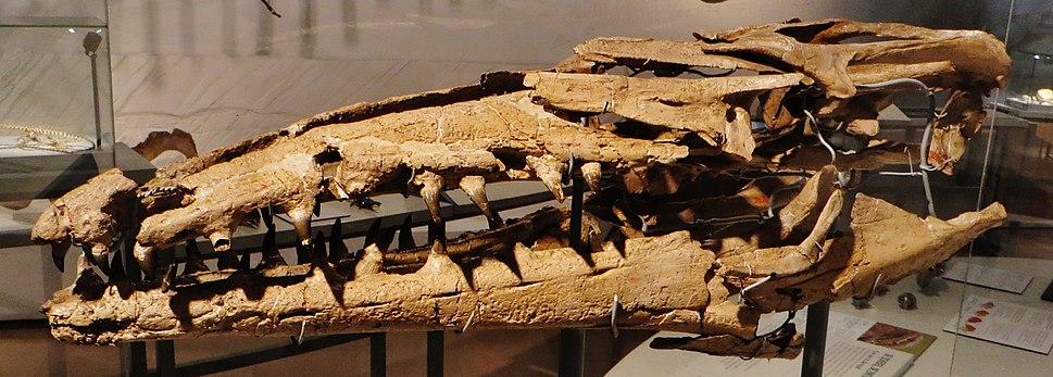 Mosasaurus lemonnieri 456