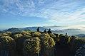 Mt Pulag Dwarf Bamboo.jpg