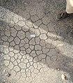 Mudcracks.jpg