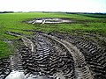 Muddy Field Near West Roucan - geograph.org.uk - 353608.jpg