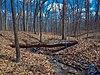 Muskego Park Hardwoods.jpg
