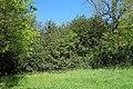 Nachrodt-Wiblingwerde-NaturdenkmalHülsenbusch-2-Asio.JPG